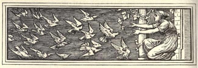strange birds 3