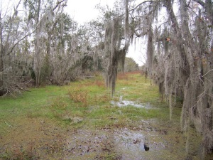 wetlands 3